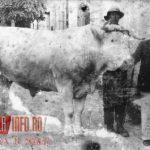 Gherla 1930 evrei