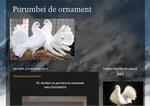 gherla porumbei de ornament blog