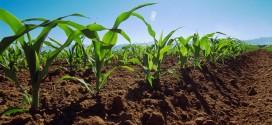 apia plati agricultura