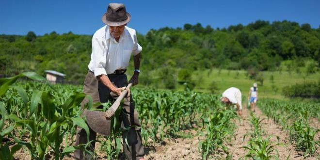 apia agricultura plati
