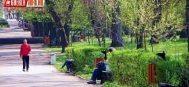 gherla parc cosuri gunoi