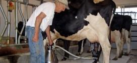 producatori lapte apia ferma caci