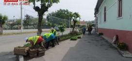 adp gherla muncitori rond flori strada liviu rebreanu
