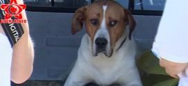 caini adapost gherla sterilizare pro canes