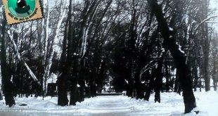 gherla 1969 iarna parc