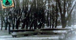 gherla iarna parc 1969