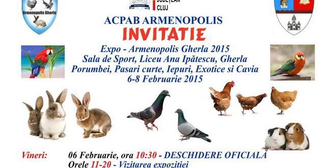 expozitie porumbei iepuri armenopolis gherla