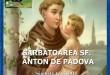 pelerinaj greco catolic padova gherla