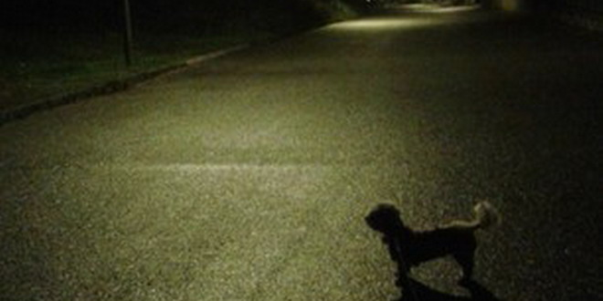 bichon strada noapte