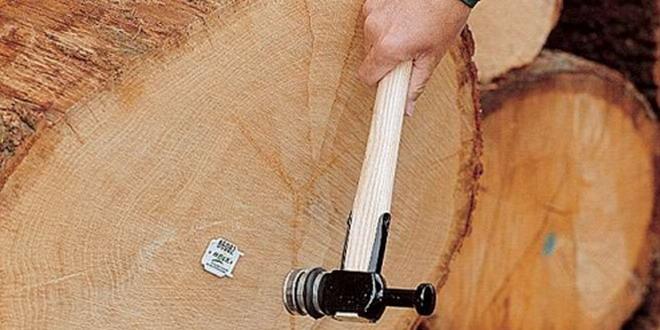 bustean lemn