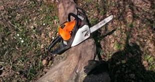drujba copac