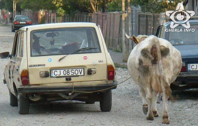 masina trage vaca gherla cluj