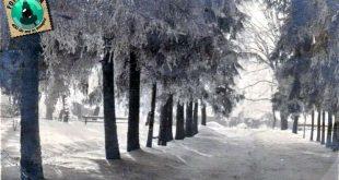 1935 gherla iarna parc