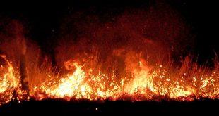 incendiu vegetatie noapte