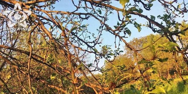 copac atac omida uscat