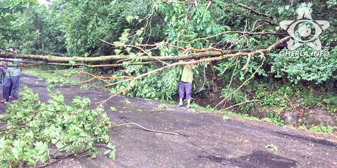 copac rupt furtuna strada fizesului gherla