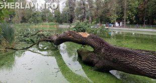 copac lac furtuna gherla