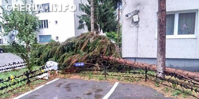 copac rupt furtuna gherla