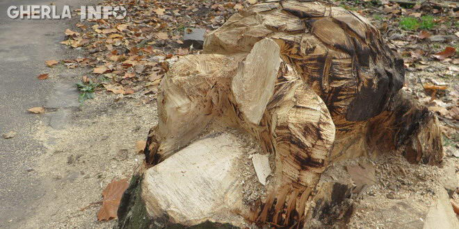 broasca sculptata gherla decapitat