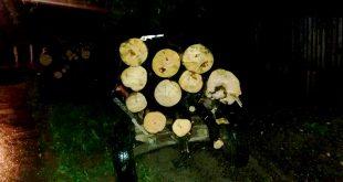 cauta lemne noapte