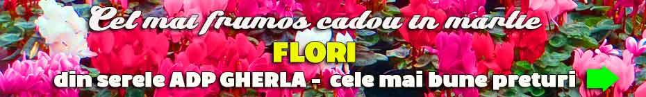 flori vanzare 8 martie gherla adp pret