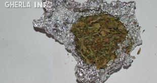 droguri marijuana