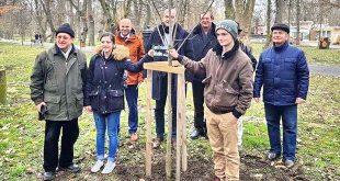 plantare copaci parc gherla