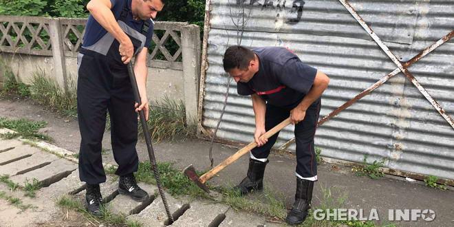 caine pompieri gherla