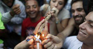 cannabis fumat club