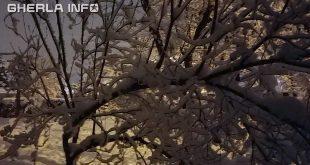 copac zapada crengi noapte