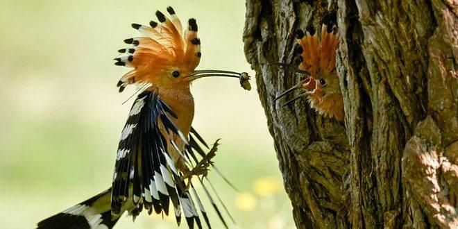 ciocanitoare marius petric