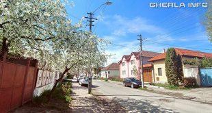 gherla strada crisan primavara copac inflorit