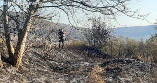 deal incendiu vegetatie mort