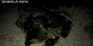 accident urs cluj autostrada turda bors