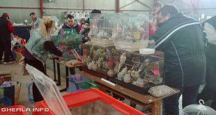 expozitie animale gherla