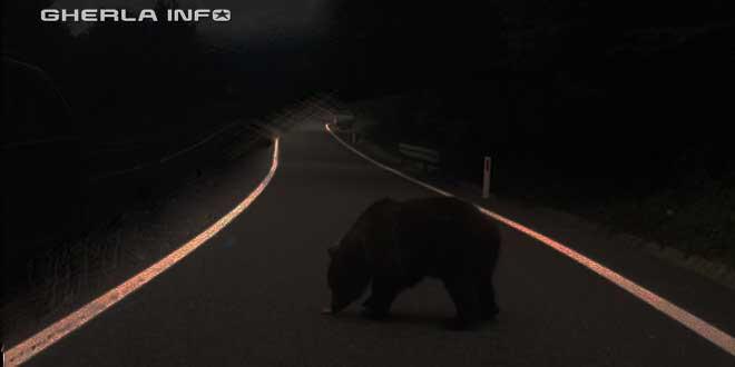 urs sosea