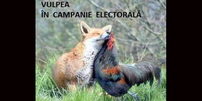 vulpe campanie electorala