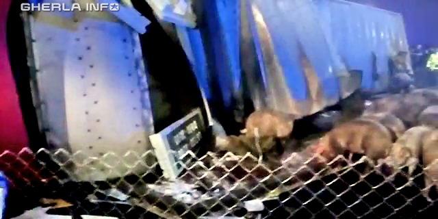 accident tir rasturnat porci huedin cluj