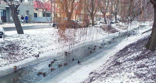 gherla iarna canal rate