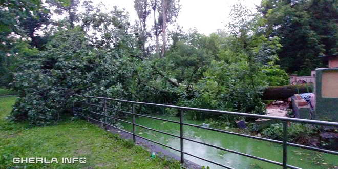 copac rupt parc gherla