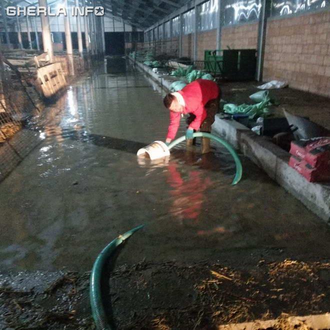ferma inundatie bont