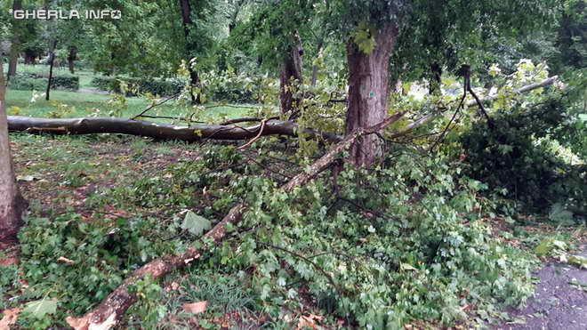 furtuna copac rupt gherla
