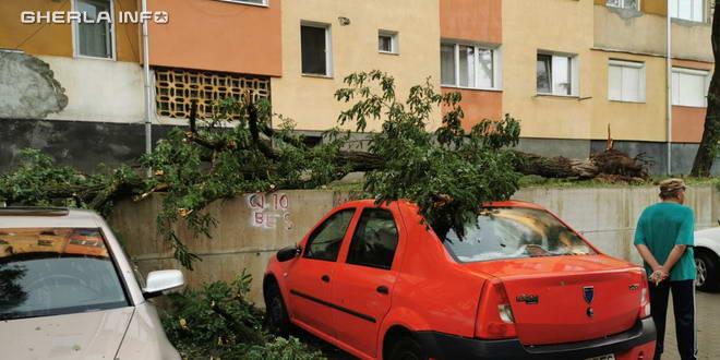 furtuna dej copac masina